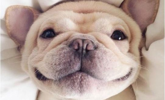 funny-dog-smile-happiness-cute0