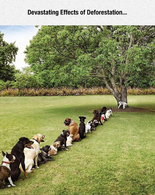 funny-dogs-queue-line-tree