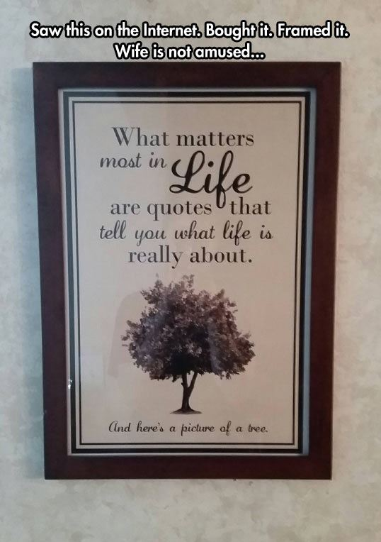 funny-frame-tree-picture-life-quote