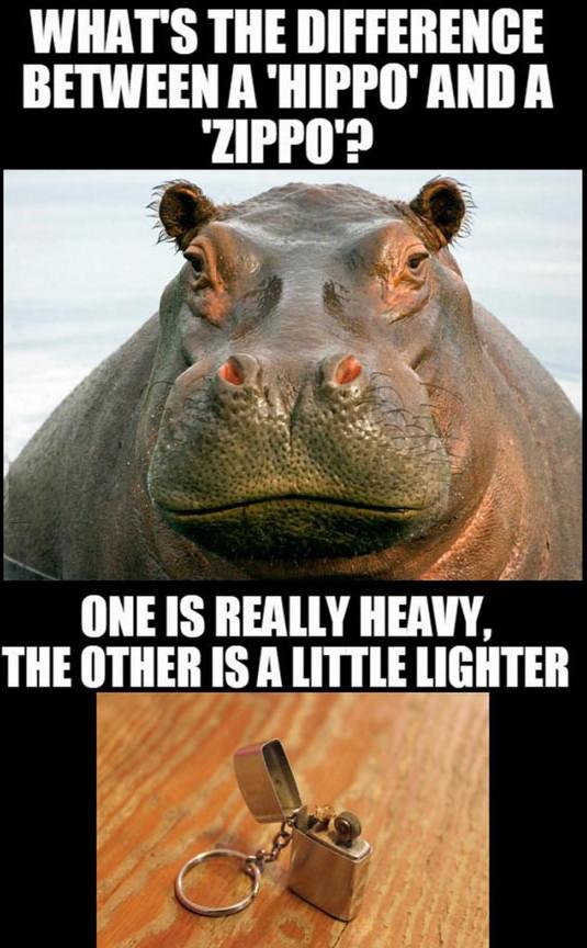 funny-hippo-face-zippo-joke