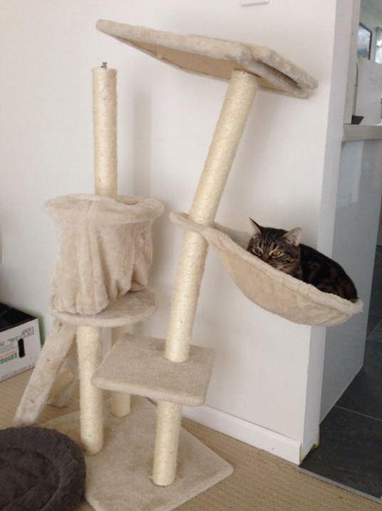 funny-overweight-cat-tree-broken