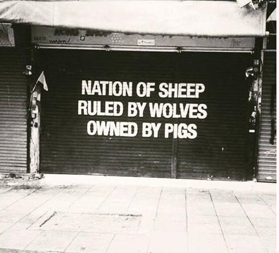 funny-quote-nation-sheep-street