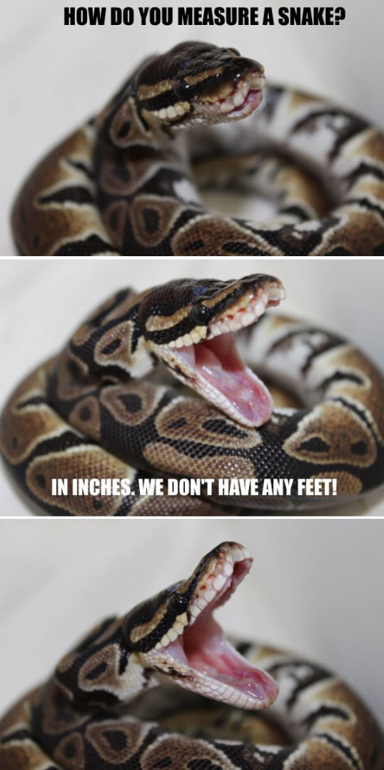 funny-snake-measure-inches-joke