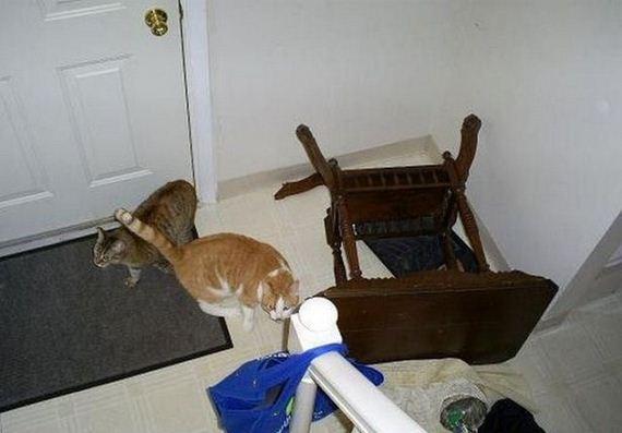 08-mischievous-pets