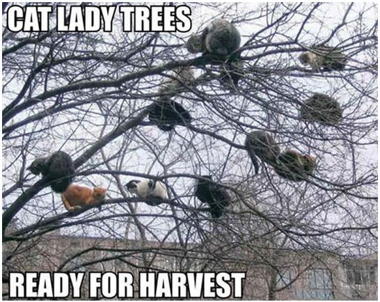 cool-cats-tree-orange-cat