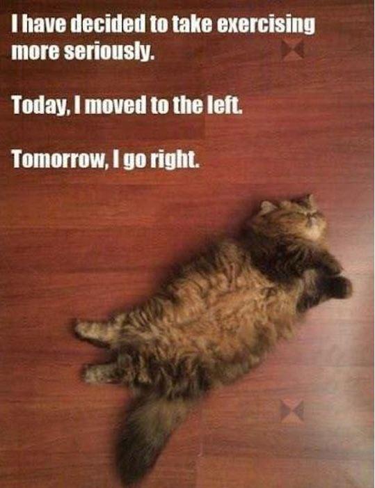cool-fat-cat-sleeping