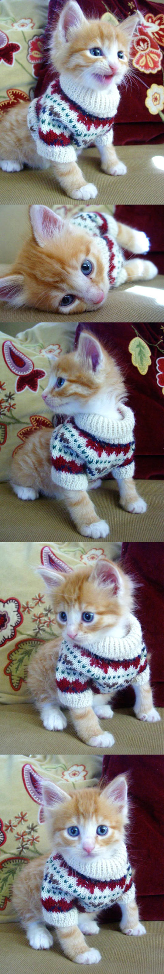 cool-kitten-sweater-clothes