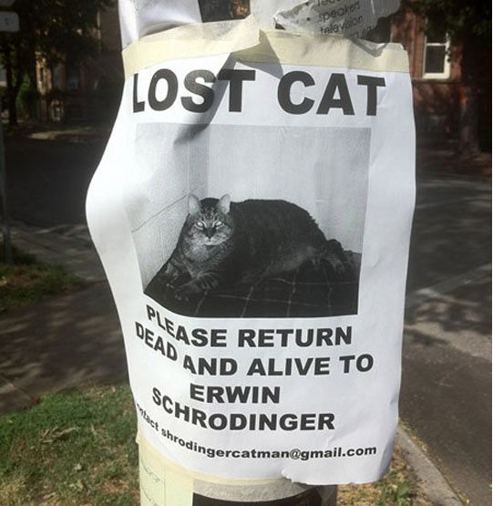 cool-lost-cat-sign
