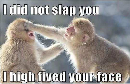 cool-monkey-slap-high-five-face