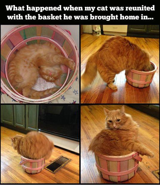 cool-orange-cat-basket
