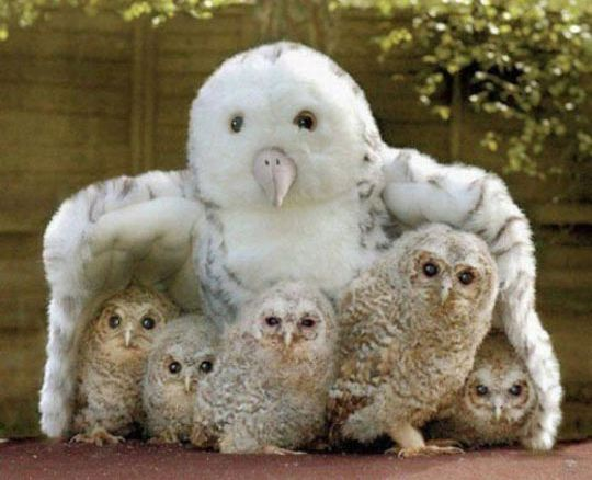 cool-owl-baby-toy-cute