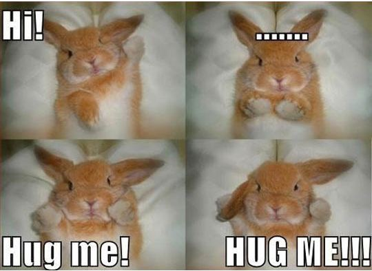 cool-rabbit-bunny-hug-cute