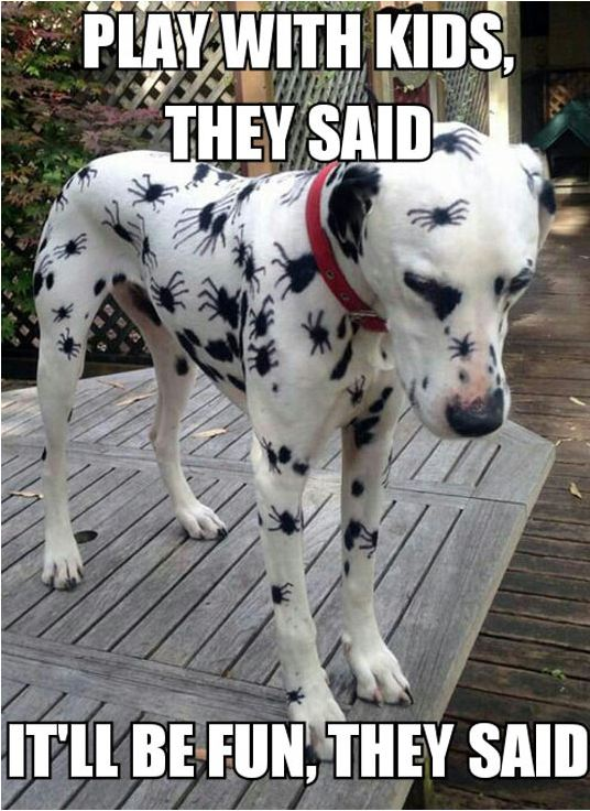 funny-dalmatian-halloween-spiders-costume
