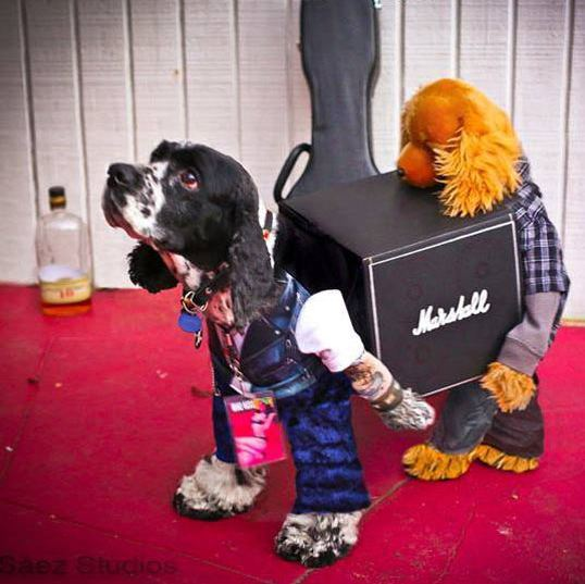 funny-dog-halloween-costume-carrying-marshall-amplifier