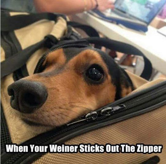 funny-dog-bag-zipper