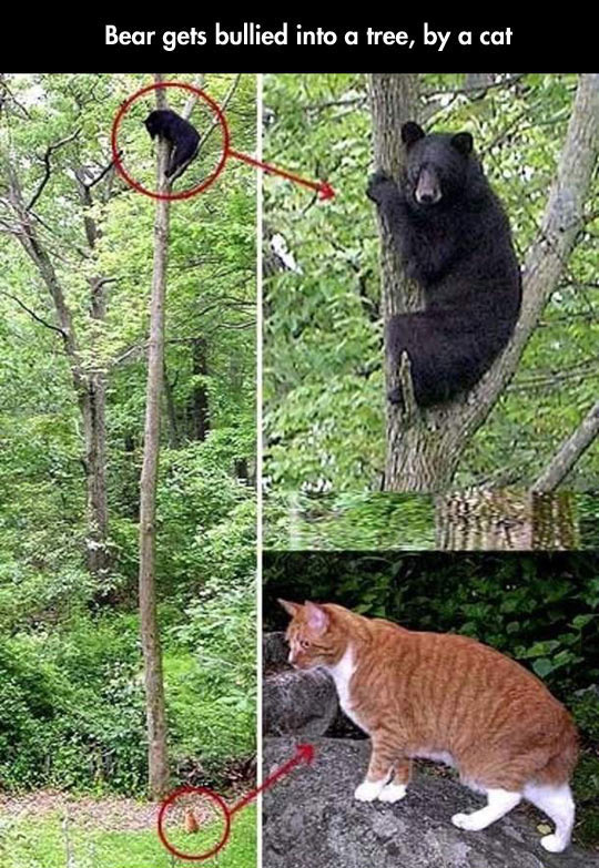 Small Wild Animals: Cats Are Scared Of Nothing