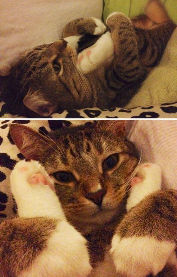 Photos Of Cats Acting Weird Barnorama