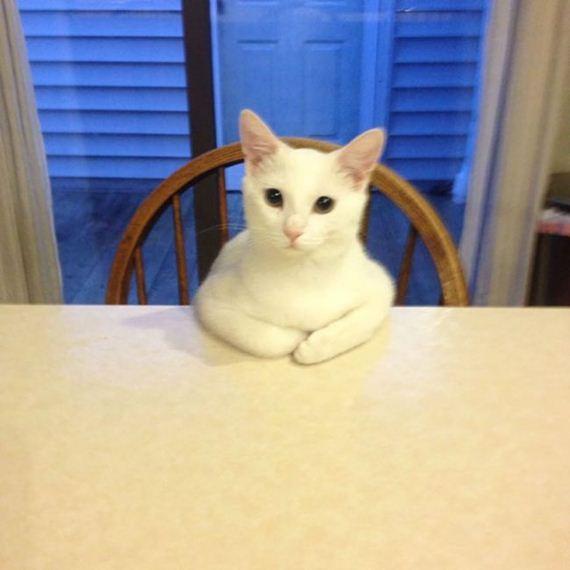 Photos Of Cats Acting Weird