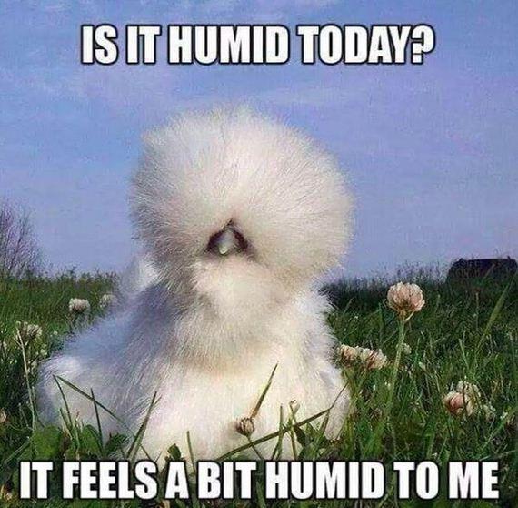Funny Jokes About Heat Barnorama