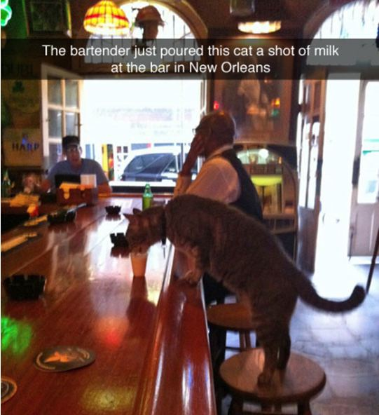 Just The Usual Customer Having A Drink Barnorama