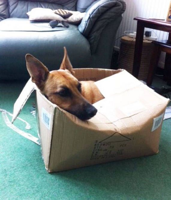 Dogs Who Think They Are Cats Barnorama