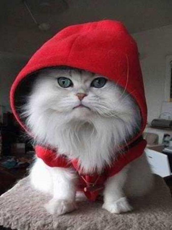 Cute Cats In Hoodies Barnorama
