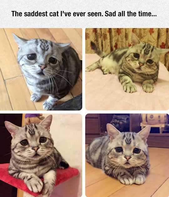 Why Is This Kitty So Sad?