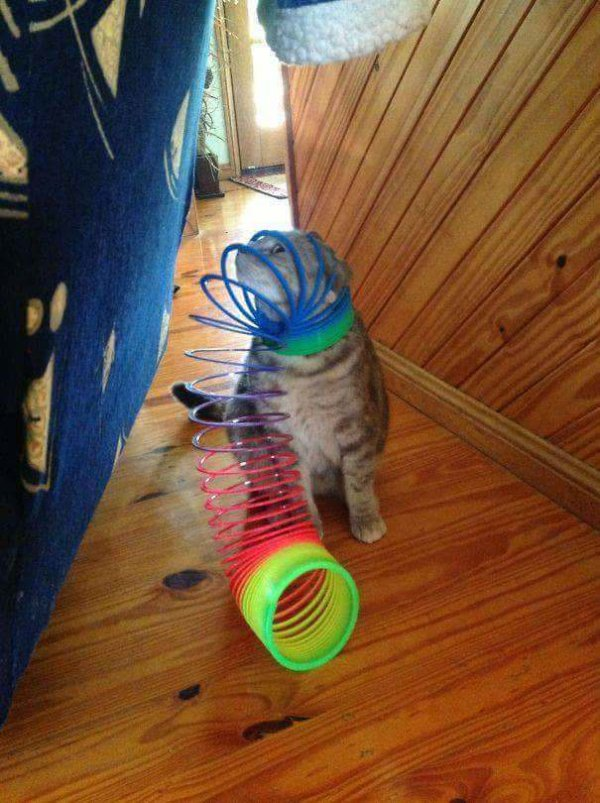 Cats Who Seriously Regret Their Life Choices
