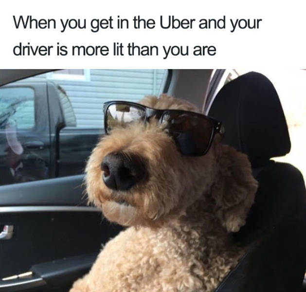 Uber Rides Can Only Be Described With Animal Memes
