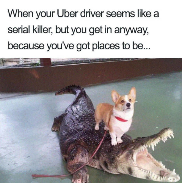 Affiliate Disclosure: Uber Rides Can Only Be Described With Animal Memes