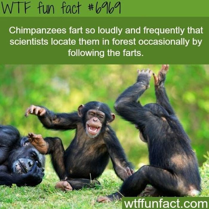 wtf fun facts collection barnorama