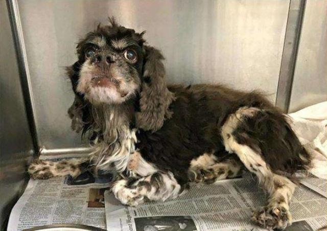 Abandoned Dog Gets Haircut Barnorama
