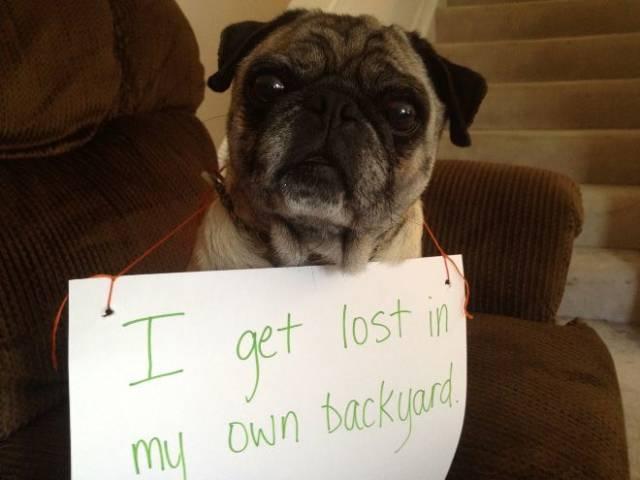 The Best Dog Shaming Photos Barnorama