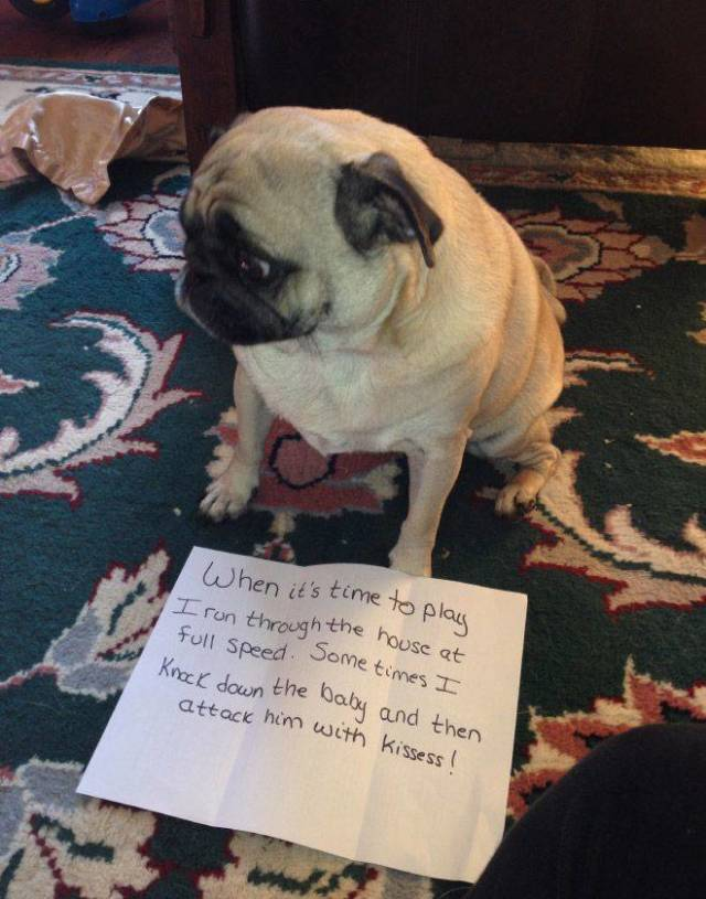 The Best Dog Shaming Photos Barnorama