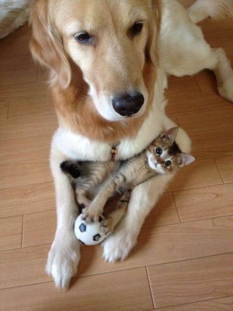 20 Hilarious Photos Cats And Dogs