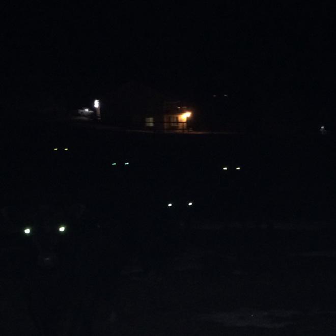 Cows At Night Look Terrifying Barnorama