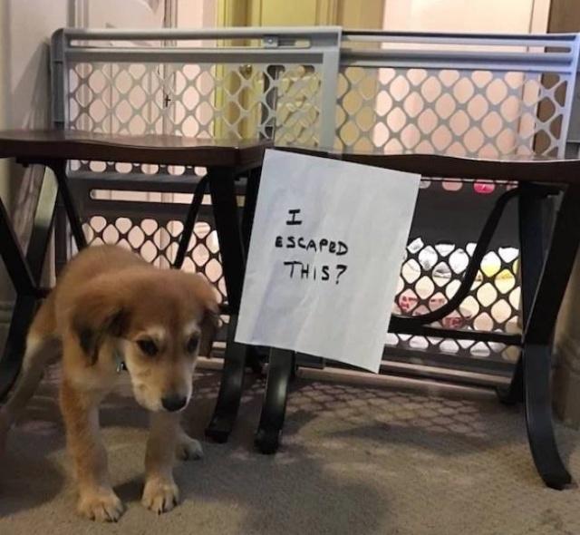 Im a celebrity 2019 funny dog