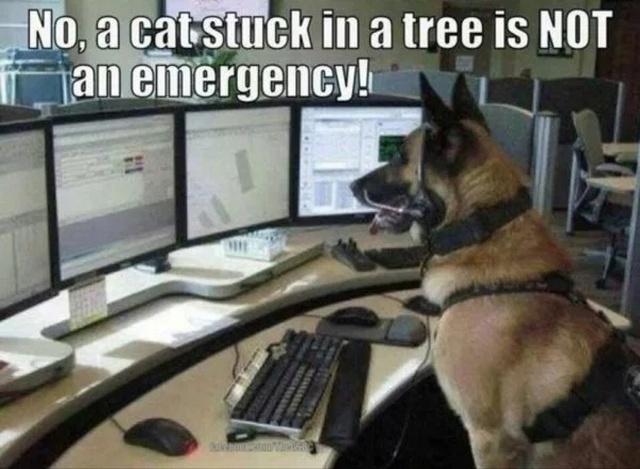 36 Funny Service Dog Memes Barnorama