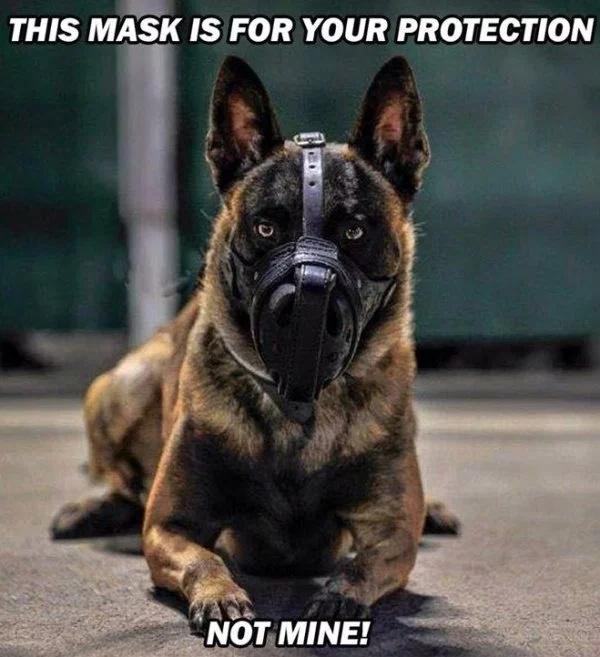 36 Funny Service Dog Memes
