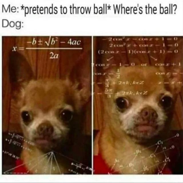 31 Funny Dog Memes