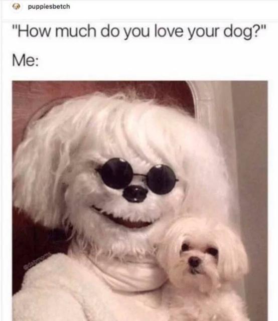 31 Funny Dog Memes - Barnorama
