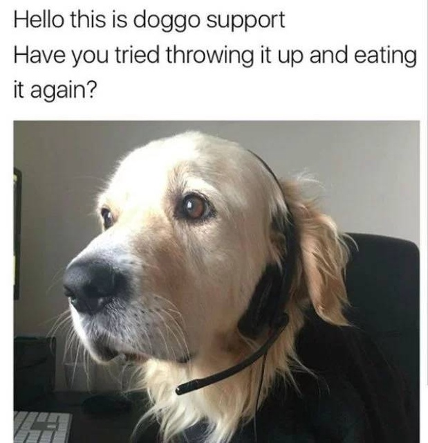 Car 2021: 31 Funny Dog Memes