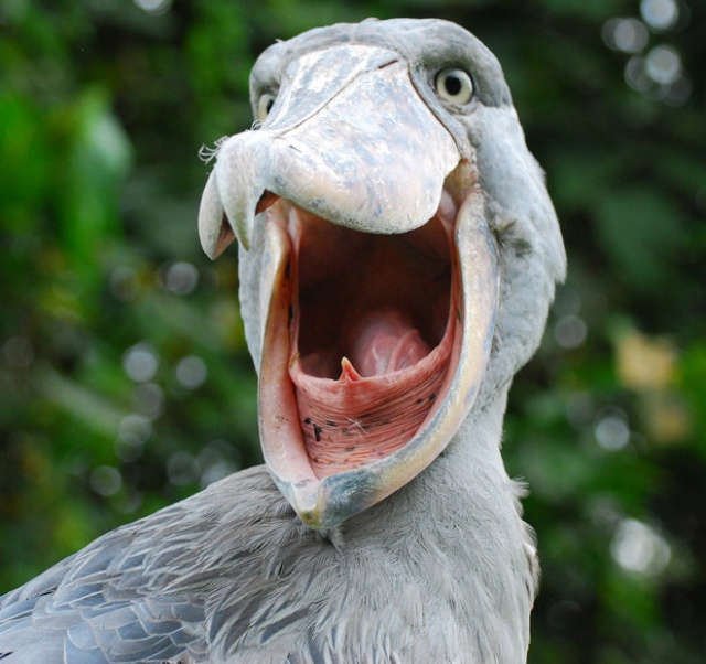 The Most Terrifying Bird Mouths Barnorama
