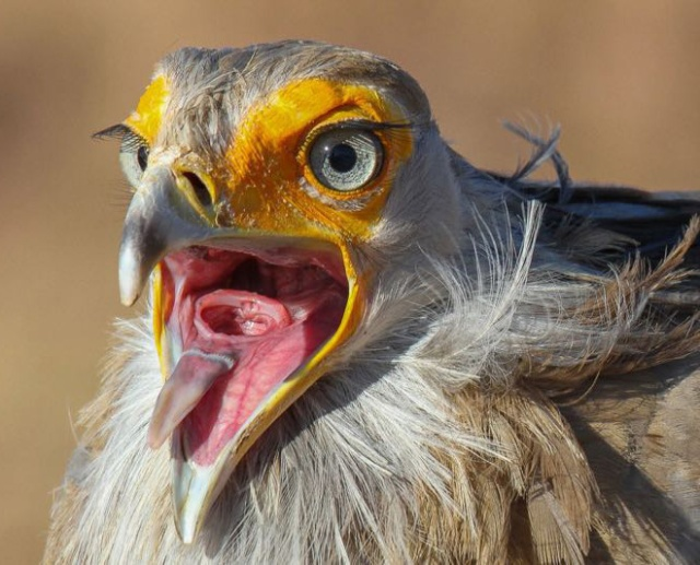 Old Fashion Cars >> The Most Terrifying Bird Mouths - Barnorama