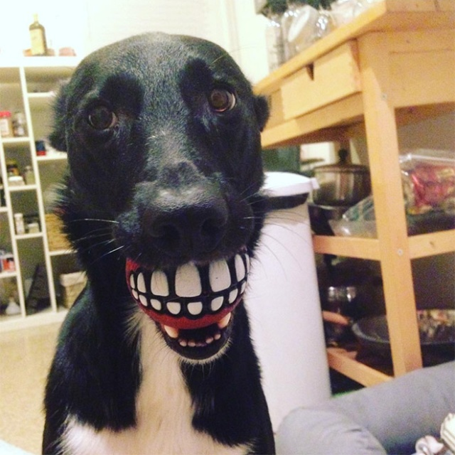 Cool And Funny Toy For You Dog Teeth Ball Barnorama