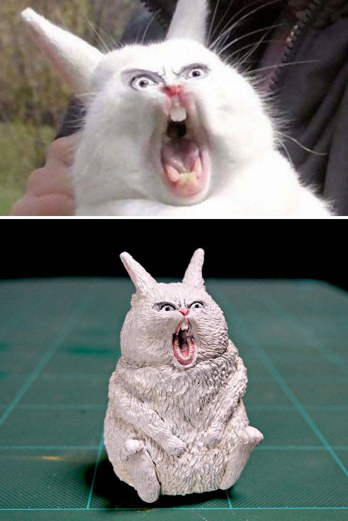 40 Awesome Real Life Versions Of Animal Memes - Barnorama