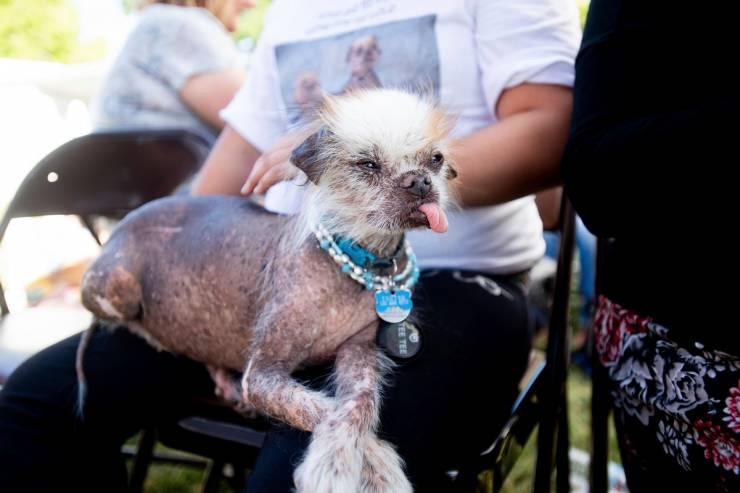 "25 ""World's Ugliest Dog"" Contenders! - Barnorama"
