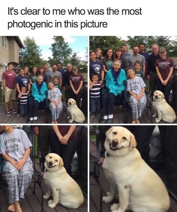 28 Funny Animal Memes
