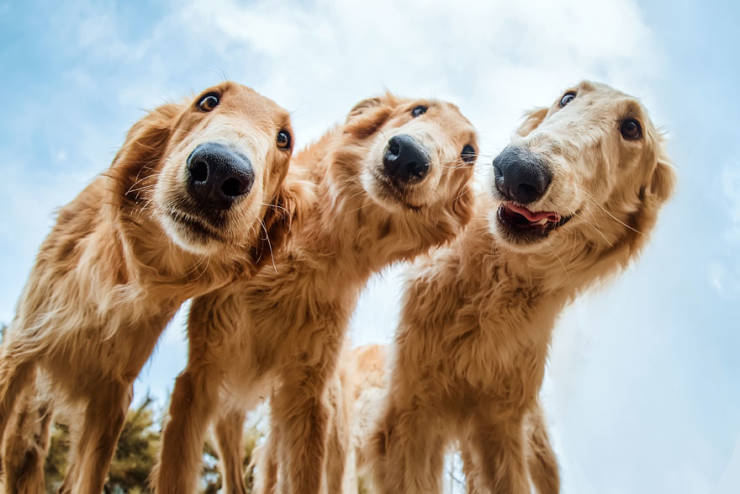 30 Best Photos From The Kennel Club's Dog Photographer Of ...