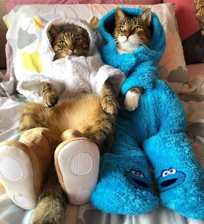 This Is Joey The Cookie Monster Onesie Wearing Cat
